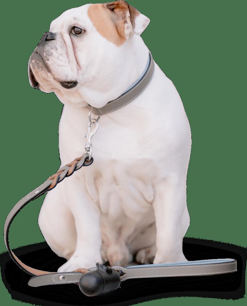 High Quality Dog Food